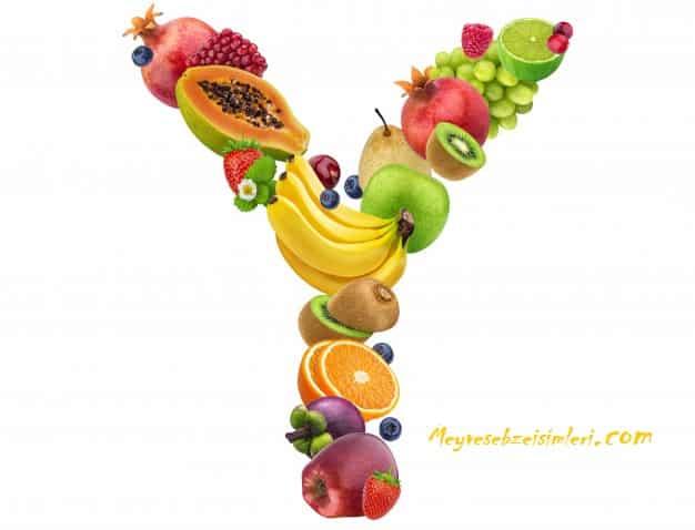 Y ile meyve sebze bitki isimleri